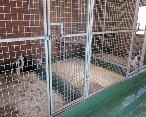 Seamless Heavy Duty Dog Kennel Resin Flooring County Durham